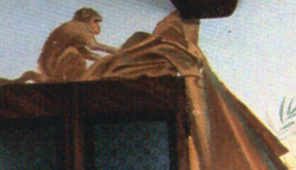 """M. Dudovich, particolare della """"prima"""" parete del salotto di Villa Amalia: la scimmia Pierrette"""